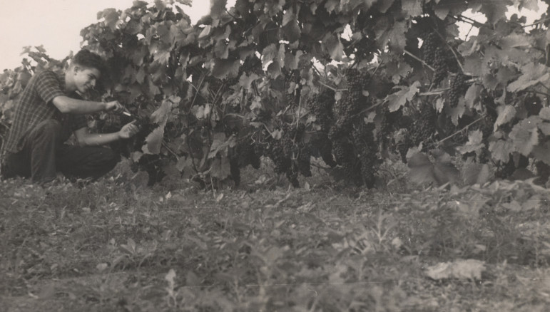 Young George Fistonich Vines